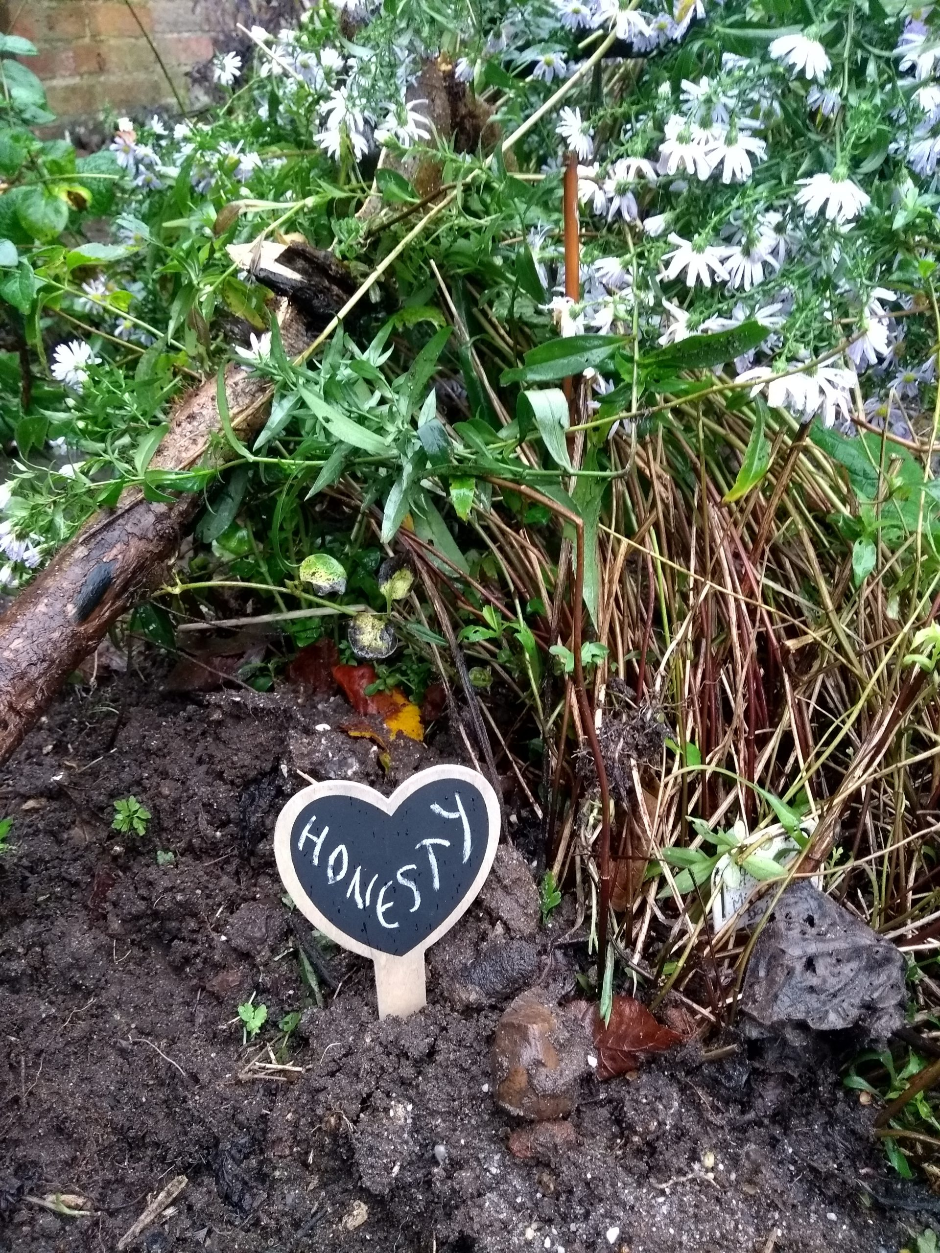 Ground and some flowers with a heart-shaped sign with 'Honesty' written on it