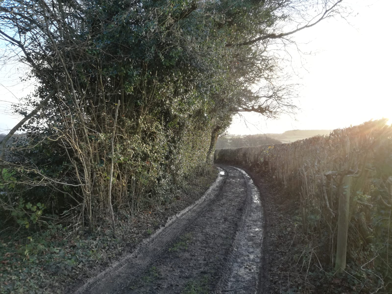 Image of a muddy lane with trees one side and a hedge the other